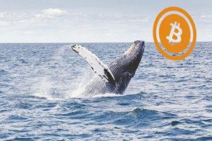 bitcoin vs ethereum walvis met bitcoin logo